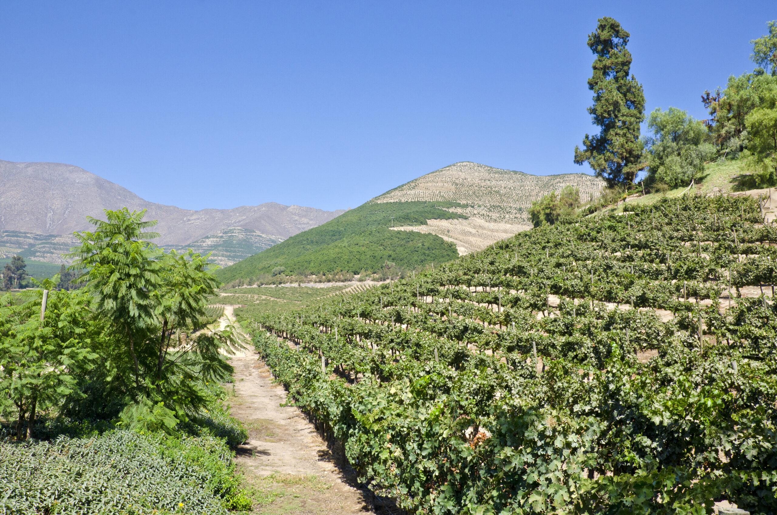"""Chile - das """"längste"""" Weinbauland der Welt"""