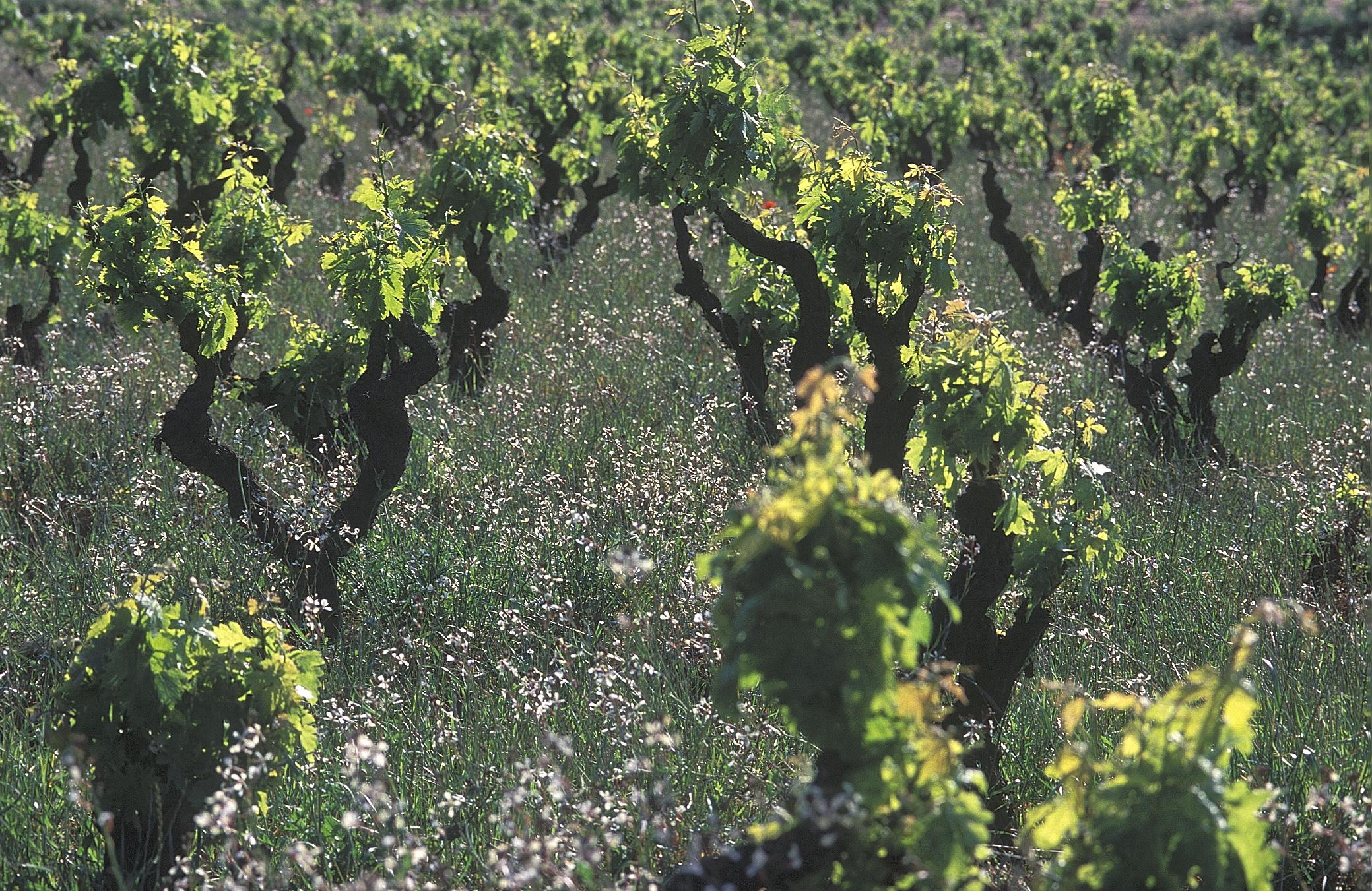 Weinreise durch Spanien - vinologische Dreifaltigkeit
