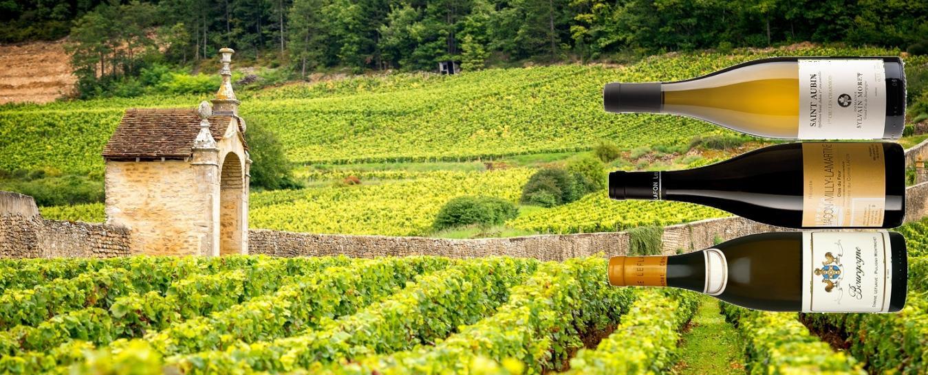 Online Tasting Weisses Burgund